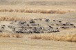 Animals In Pasture Near Alhaurin De La Torre,Spain