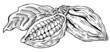Cacao beans monochrome illustration