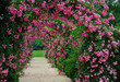 Pergola with pink blooming roses