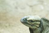 Reptil poster