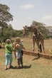 Children Looking At Rothschild Giraffe, Nairobi, Kenya, Africa