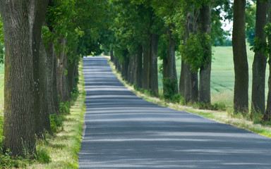 walkaway tarmac road with trees leading to unknown