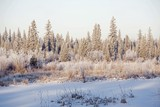 Frost On Trees, Elbow River, Alberta, Canada poster