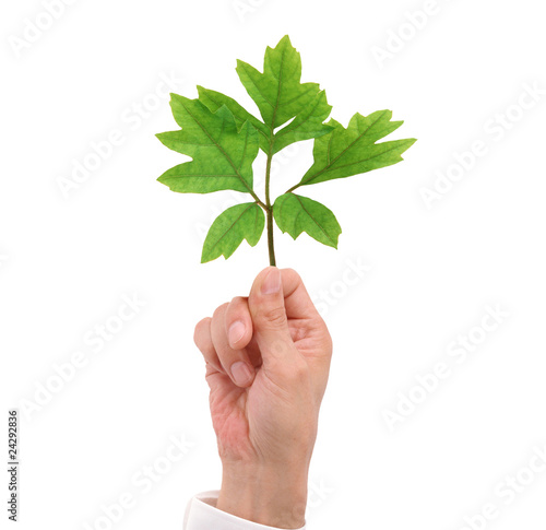 Green leaf in male hand