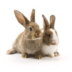 Two adorable rabbits