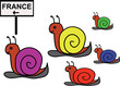 Group of funny snails moving to the France (joke)