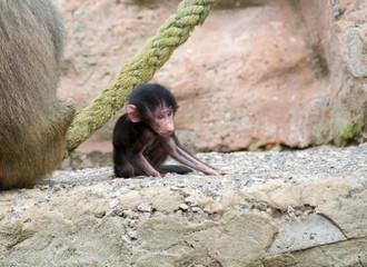 Baby Gorilla Sitting