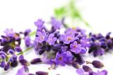 Fototapety Aroma, Lavendel