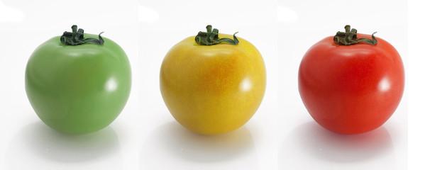 tomates multicolore