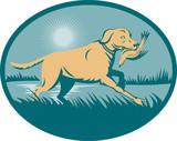 Trianed Retriever  gun dog with bird on wetland poster