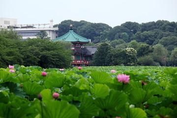 弁天堂と蓮花 (東京・上野不忍池)