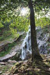Wasserfall mit Baum
