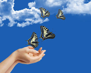 Mani con le farfalle