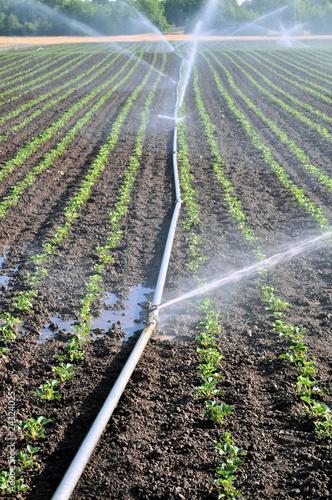 Fotobehang Droogte Water spray