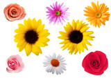 Fototapety Roses, sunflowers, aster, gerbera, marguerite flowers