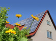 Solar cells on a roof with flowers in the foreground.
