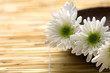 Wooden bowl with fresh white chrysanthemums