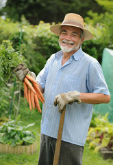 Senior holds  a bunch of harvested carrots