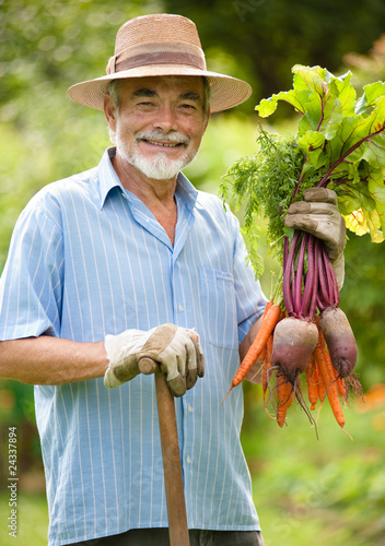 Senior holds  a bunch of harvested carrots and beetroots