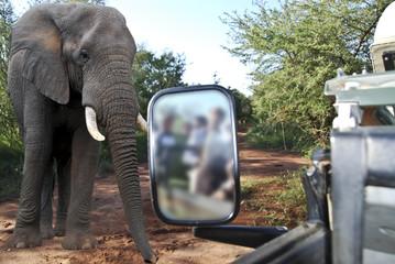safari  nel parco Chobe