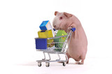 Rodent in a Shop poster
