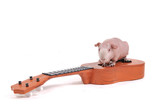 Rodent Musician poster
