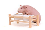 Skinny Rodent at Food Bowl Support poster