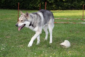 Siwan in der Hundeschule