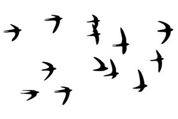 vogelschwarm wandtattoo
