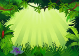Forest background - 24344857