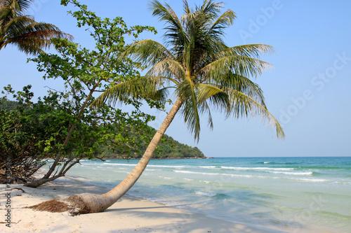 palmen am strand von phu quoc vietnam stockfotos und. Black Bedroom Furniture Sets. Home Design Ideas