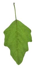 Leaf  on gleam