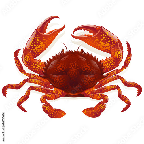 Red crab - 24357484