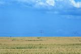 Summer field in south-western Germany