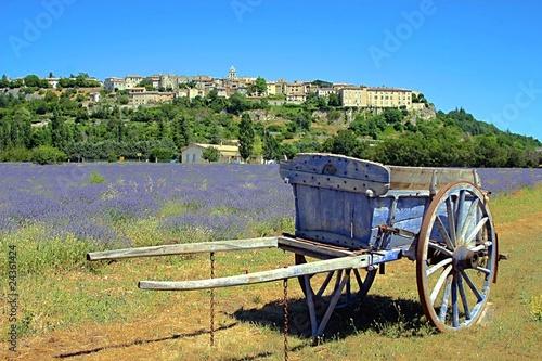 Tuinposter Olijfboom Lavender field in Provence, France