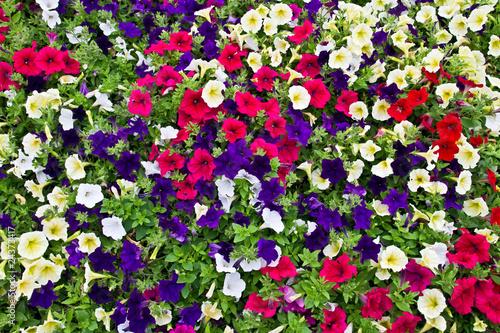 Fotobehang Macro Garden flowers