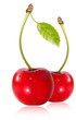 Vector. Cherries with water drops.