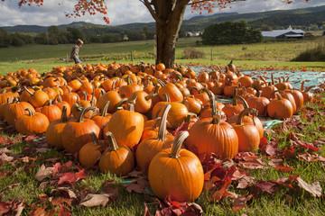 Young Boy Walking Through an Arrangement of Pumpkins
