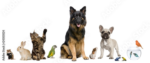 Group of pets together in front of white background - 24383824