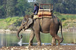 Elephant and mahout at river in Nepal