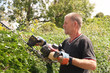 Skilled workman cutting hedges