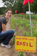 Young woman picking basil