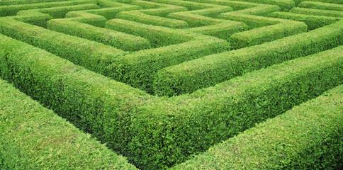 Irrgarten  Hedge Maze