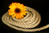 yellow flower and rope
