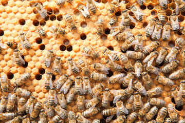 many bees on honeycombs