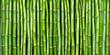 bamboo - 24409447
