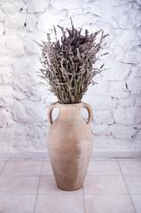 Lavender in terracotta pot