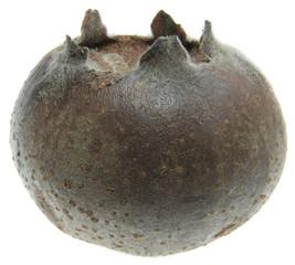 Full focus of medlar fruit