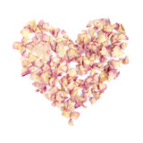 heart from rose dry petals on white background