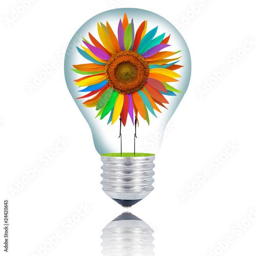 lampadina girasole arlecchino © Giuseppe Porzani